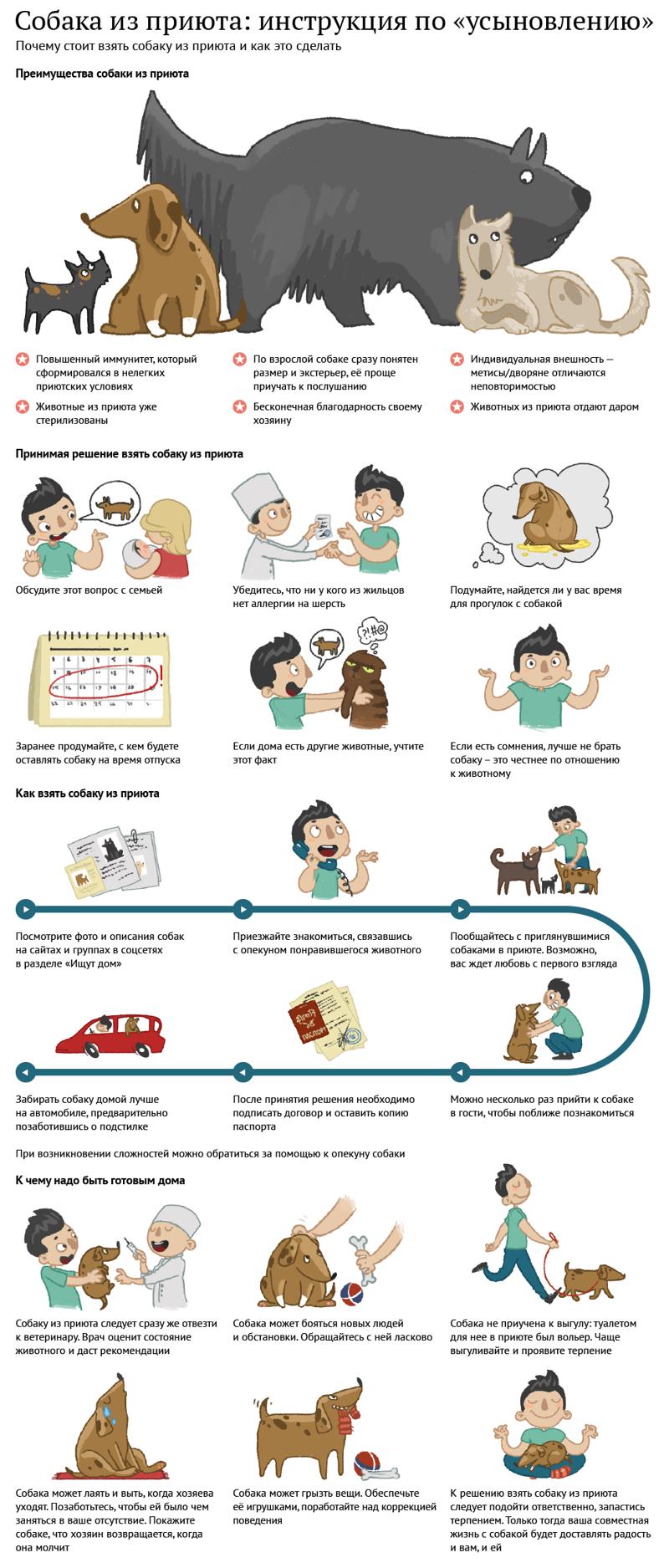 30 занимательных и очень полезных шпаргалок о домашних питомцах                      Интересное