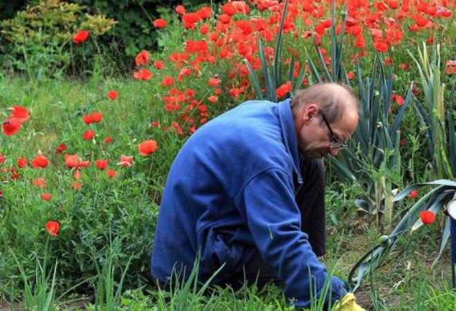 Растения, которые не следует выращивать в саду