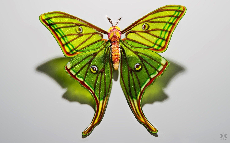 Стеклянные бабочки Лауры Харт