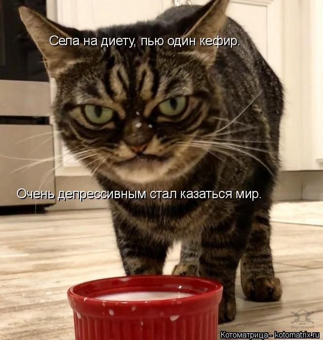 Новая котоматрица