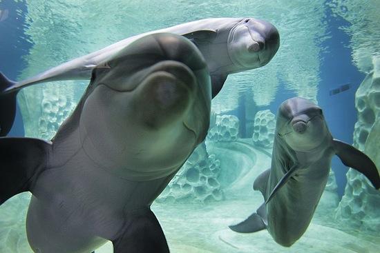 Итак, дельфины — «няшки» или безжалостные убийцы? Интересное