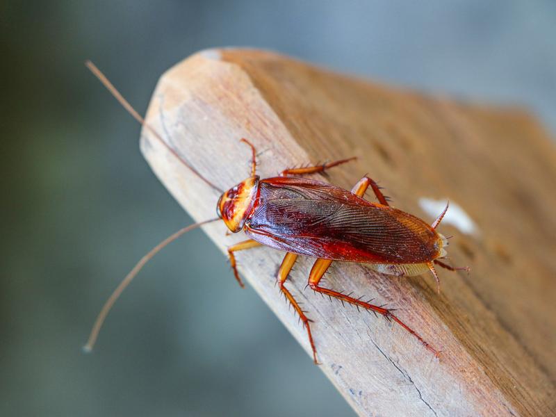 Берегись: тараканы превращаются в монстров!-4 фото-