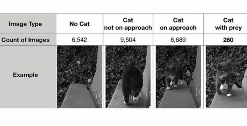 Как инженер создал систему для воспитания котов с использованием искусственного интеллекта                      Интересное