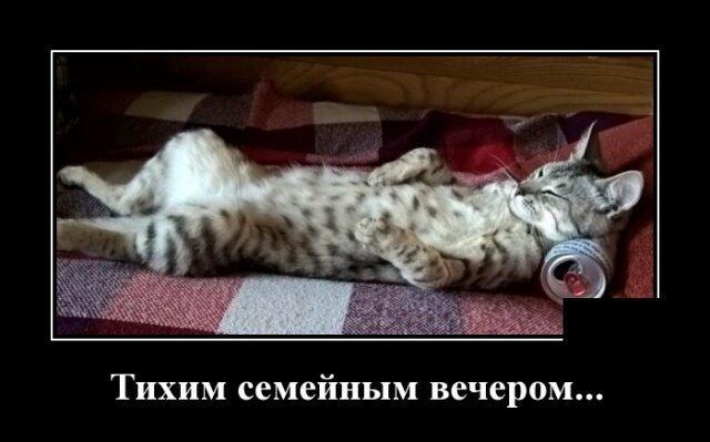 Кошачьи демотиваторы от Водяной за 02 июля 2019-18 фото-
