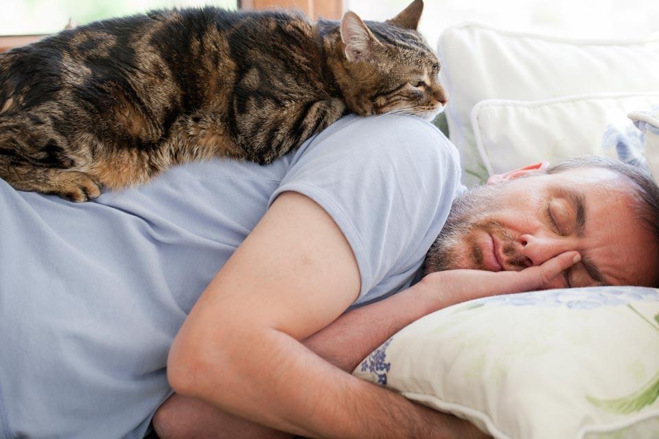 Разрешаете кошке спать в вашей постели? А вот и зря. Причины, почему этого нельзя делать Интересное
