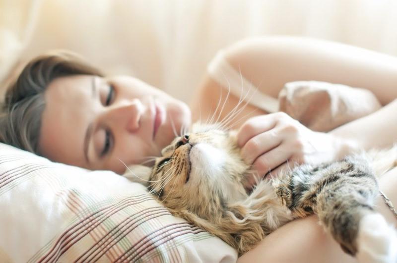 Разрешаете кошке спать в вашей постели? А вот и зря. Причины, почему этого нельзя делать