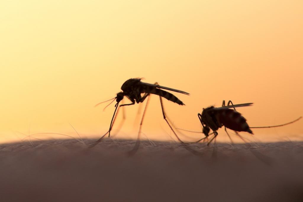 Как выследить и прихлопнуть единственного комара, который действует на нервы