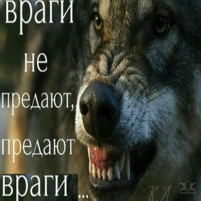 -Пацанская народная мудрость- и цитаты про волков