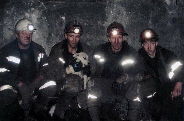 История собаки ,которая помогала шахтерам. Заслуживает уважения                      Интересное
