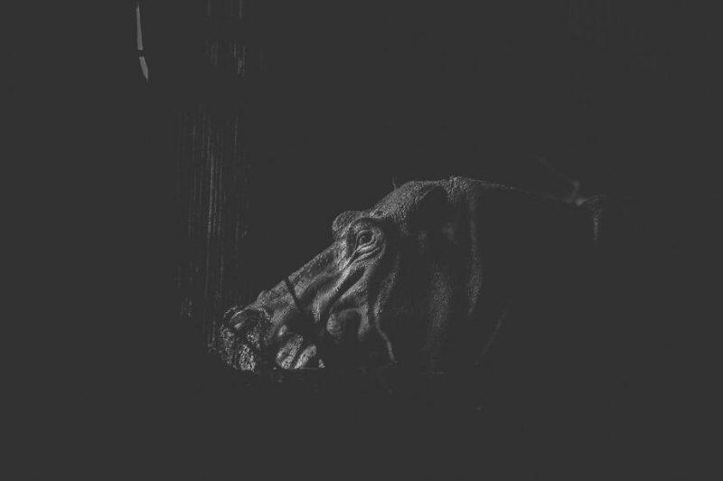 Зоопарк в Дакке - тюрьма для животных-16 фото-