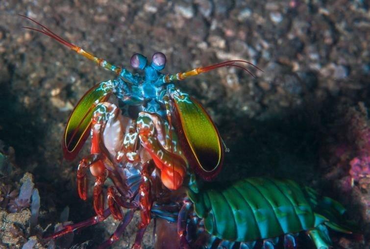 23 животных, которые выглядят как пришельцы с другой планеты-24 фото + 1 видео + 21 гиф-