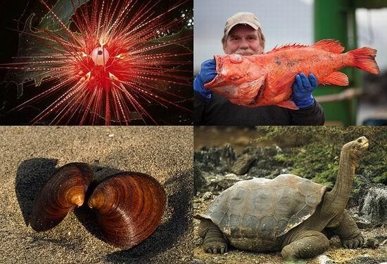 10 животных с очень большой продолжительностью жизни