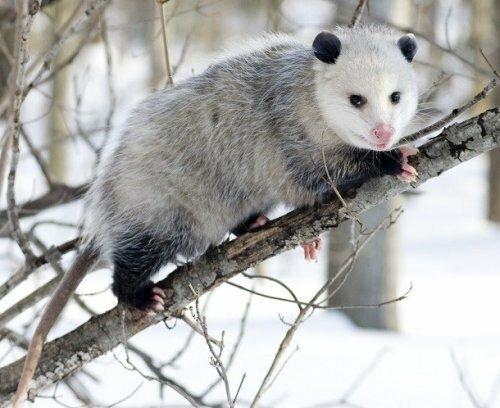 Эффективные механизмы защиты диких животных