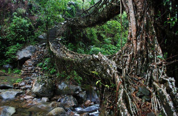 Корни фикуса и годы ожидания: как в Индии -строят- живые подвесные мосты