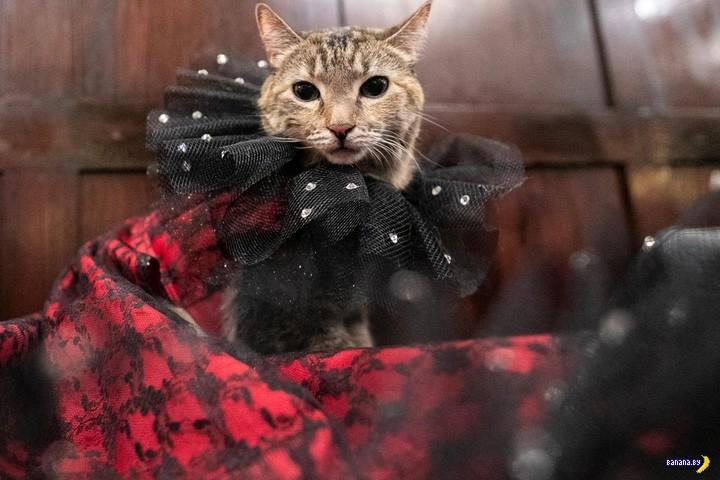 New York Cat Fashion Show 2019