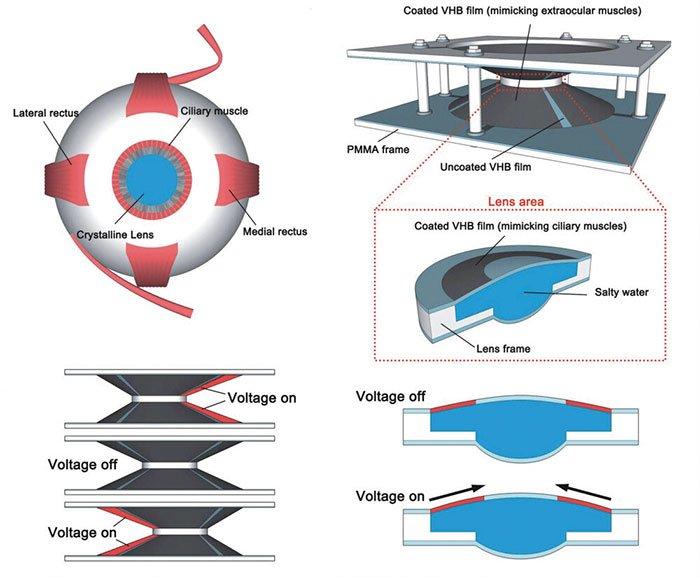 Новые контактные линзы, которые увеличивают изображение при двойном моргании