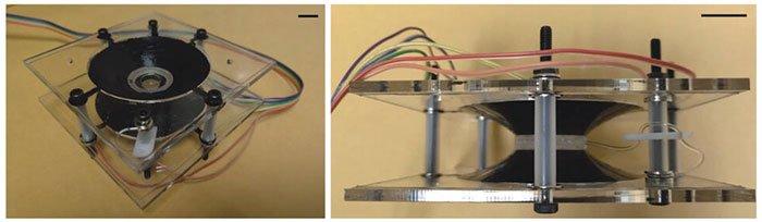 Новые контактные линзы, которые увеличивают изображение при двойном моргании хай-тек