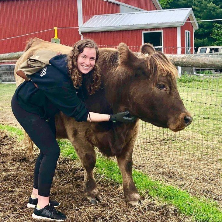 Можно расслабиться, обнимая корову за 75 долларов в час