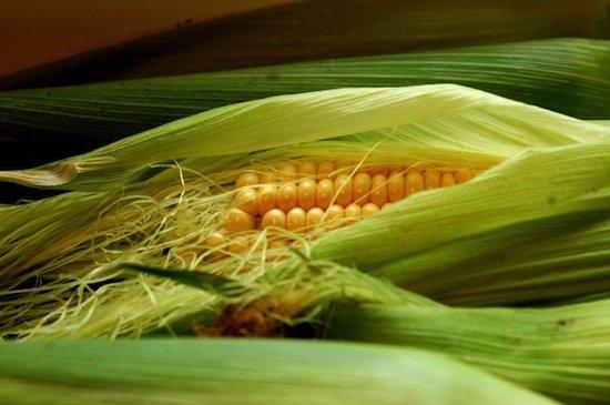 Если вы едите слишком много кукурузы, то становитесь вампиром, хоть и не пьёте кровь Интересное