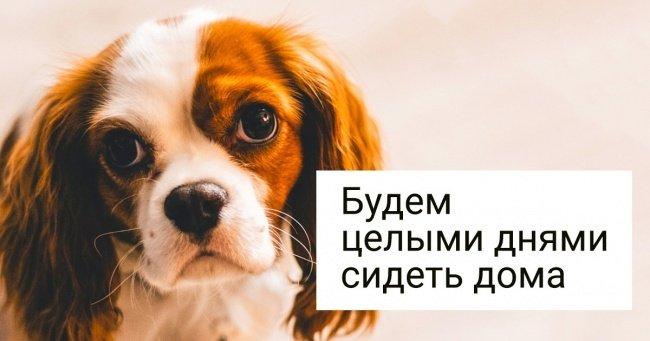 10 пород собак для тех, кто хочет завести питомца, но не любит долгие прогулки