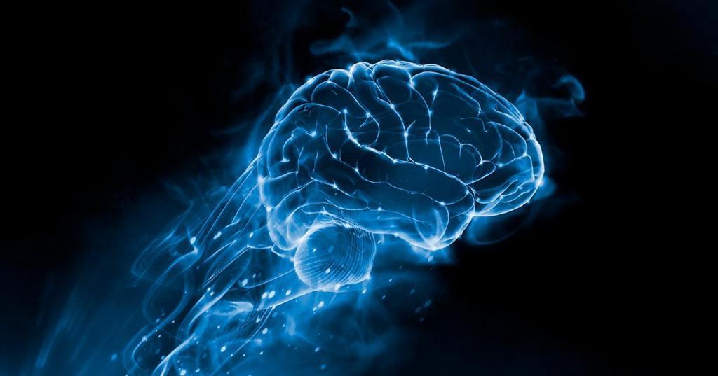 Что мы должны знать о мозге, нашем природном «компьютере» Интересное