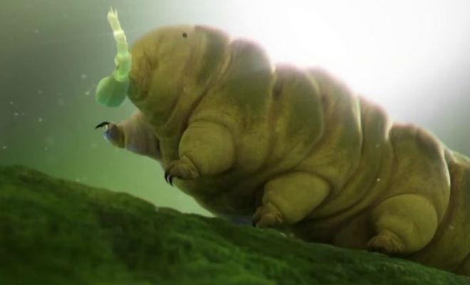 Найдено существо которое невозможно уничтожить -5 фото + видео-