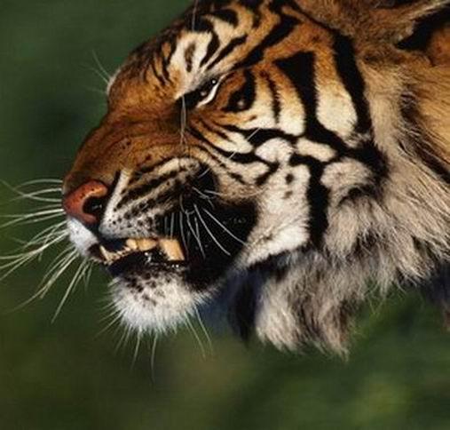 5 потрясающих способов выражения животными человеческих эмоций