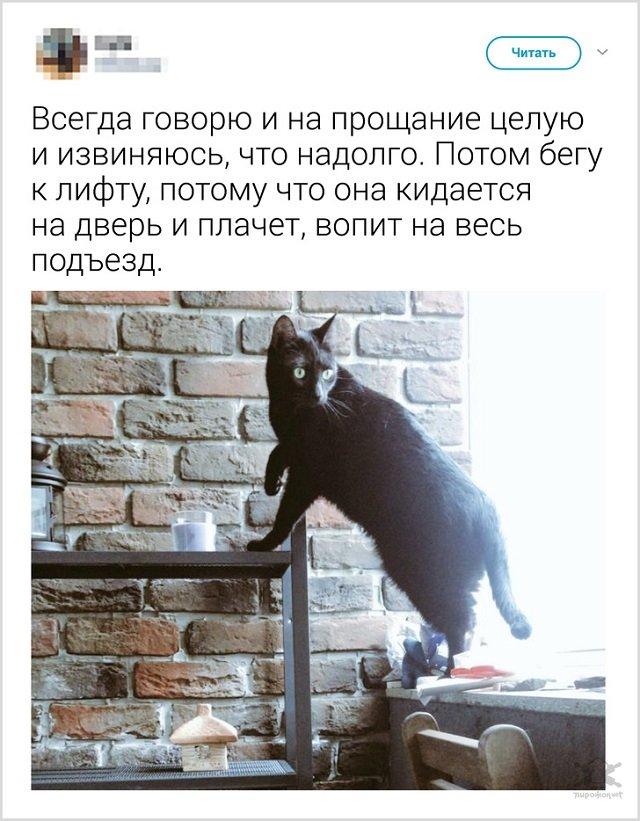 Как прощаются со своими котиками перед выходом из дома