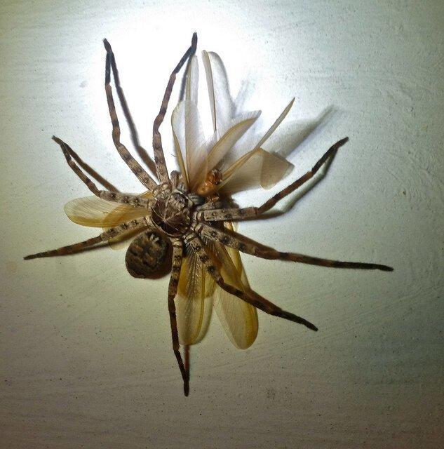10 особенных насекомых Японии-10 фото-