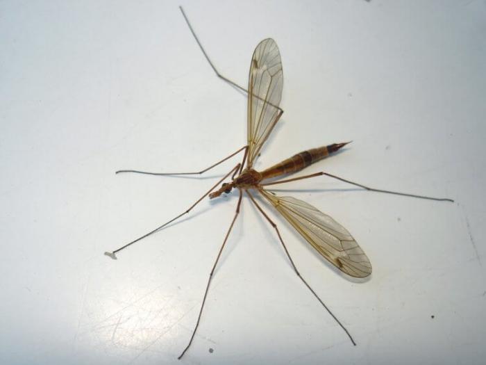 Как комары изменили мир? -6 фото-