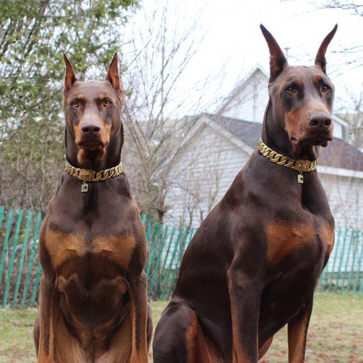 Заблуждения о некоторых породах собак