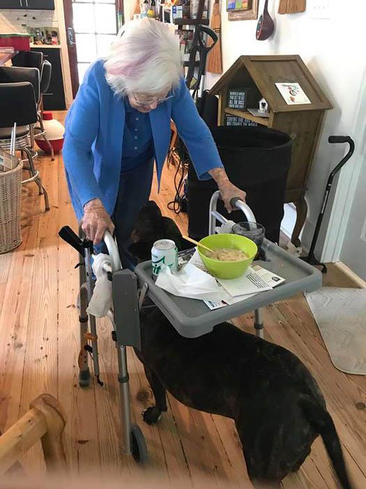 История уличного пса, который стал помощником для 99-летней женщины Интересное