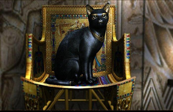 И радар, и антистресс: почему кошки были незаменимы на войне Интересное