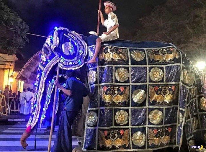 Карнавальный слон в нерабочее время