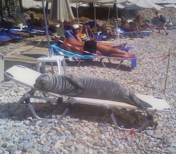 Пляжные будни