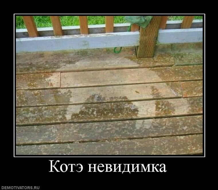 Образ Котэ в демотиваторах-18 фото-