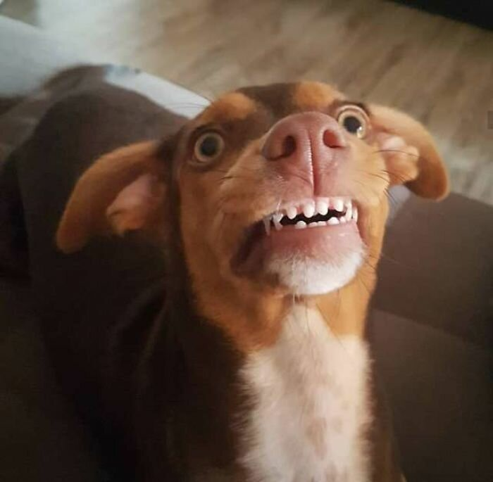 Собака преподнесла бабушке сюрприз-7 фото-