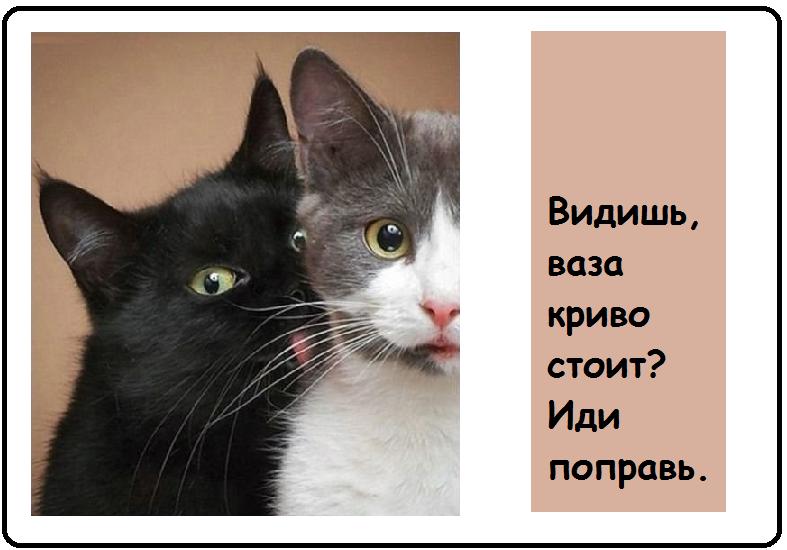 Веселые открытки-картинки-24 фото-