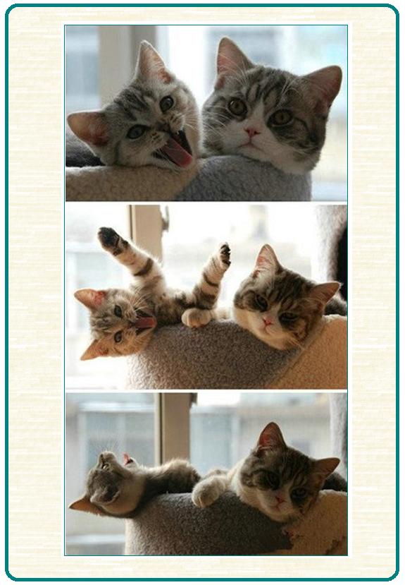 И кот, и анекдот-26 фото-