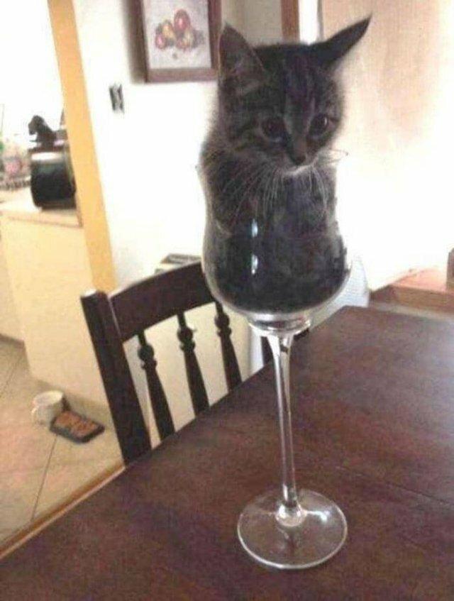 Кошачий фотопозитив-18 фото-