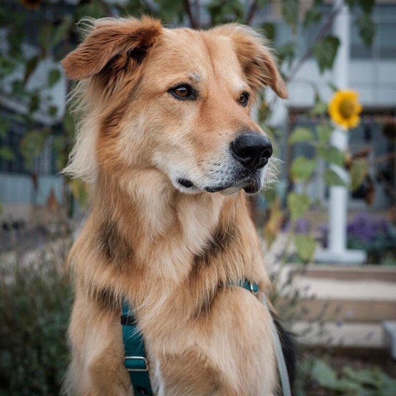 20 смешных и очаровательных собак-метисов                      Интересное