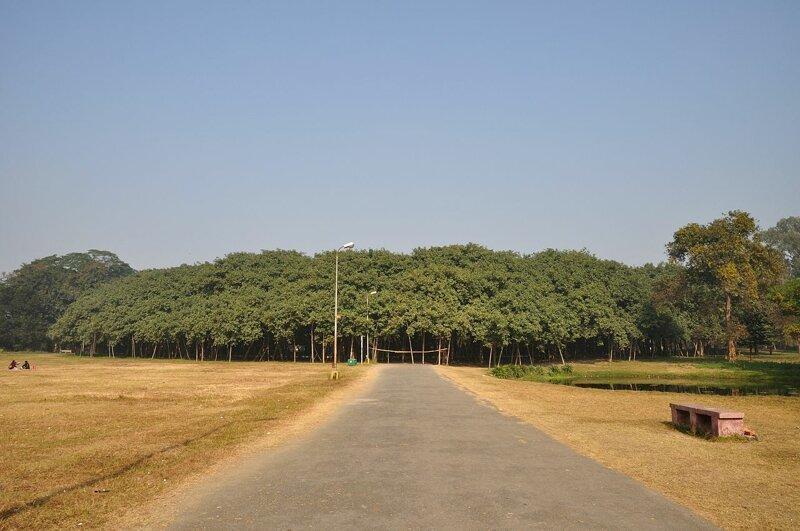 Фантастические деревья и где они обитают-30 фото-