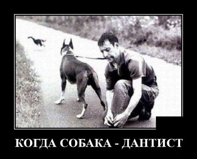 Образ собаки в демотиваторах                      Интересное