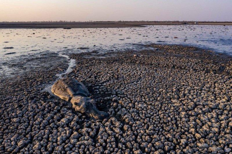 Практически высохшее озеро Нгами продолжает убивать животных-13 фото + 1 видео-