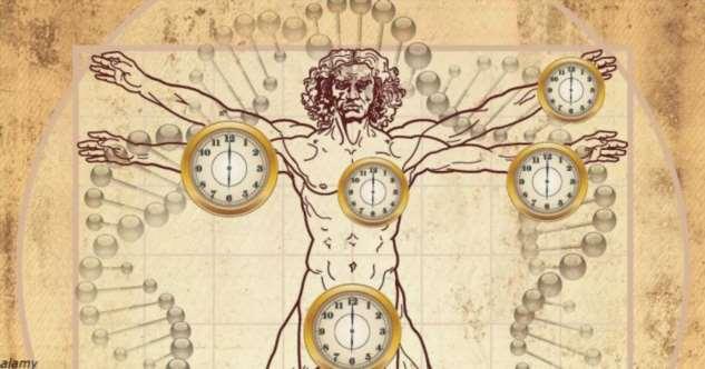 Люди могут изменить свой биологический возраст — захватывающее исследование (7 фото)