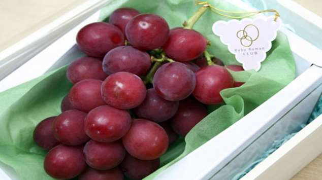 Ruby Roman — самый дорогой в мире сорт винограда Интересное