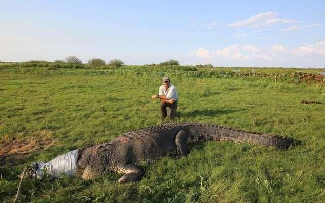 Профессиональный охотник и спасатель крокодилов — реальный Данди  Интересное