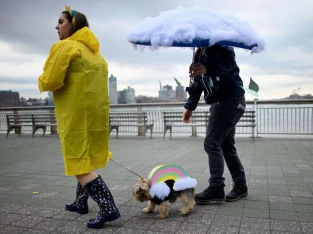 Собаки выступили на костюмированном параде в Нью-Йорке Интересное