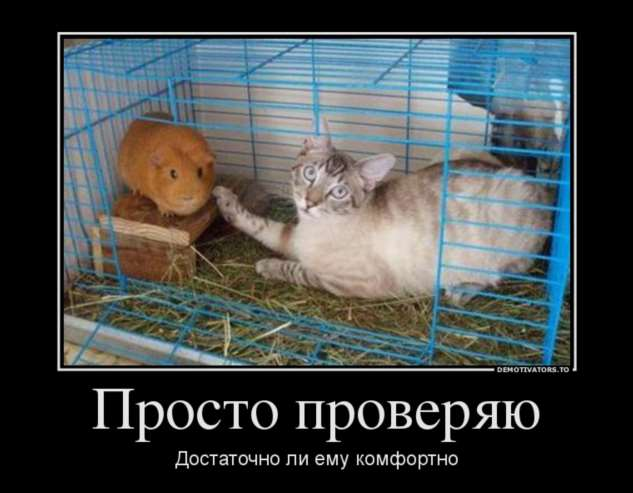 Демотиваторы. Подборка №51490427102019 юмор,демотиваторы,прикольные картинки,смешные фото