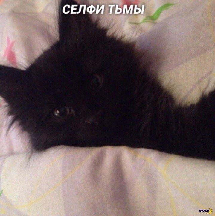 Классификация селфи котов Интересное
